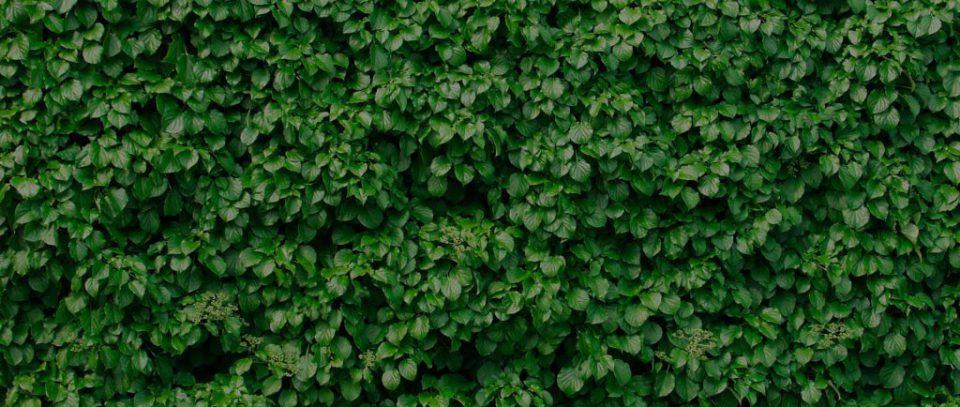 header-muro-verde-